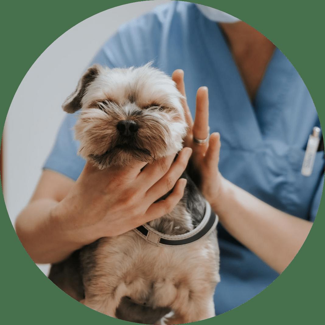 Porin Eläinlääkäripalvelu eläinten terveystarkastukset